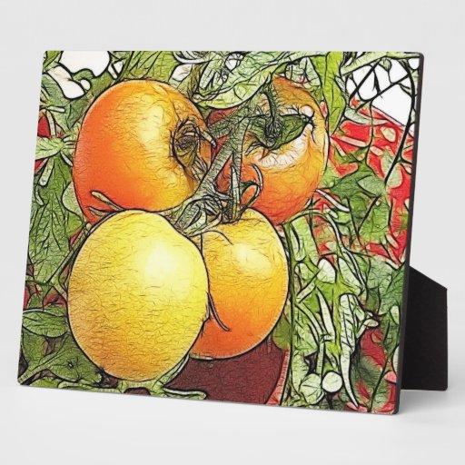Tomates frescos de la herencia del jardín placas para mostrar
