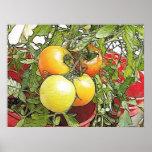 Tomates frescos de la herencia del jardín poster
