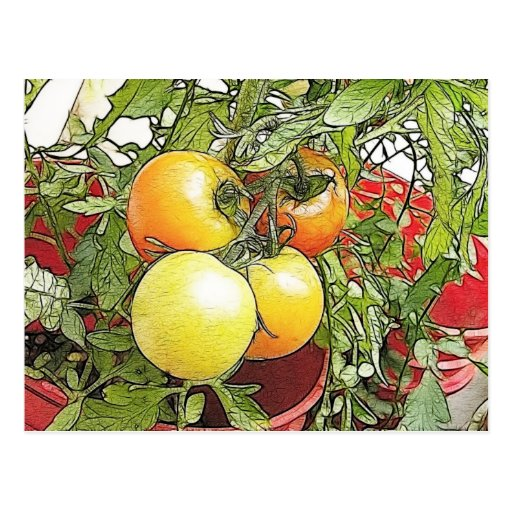 Tomates frescos de la herencia del jardín tarjetas postales