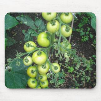 Tomates orgánicos tapete de ratón