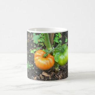Tomates orgánicos taza básica blanca