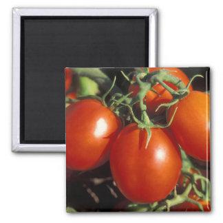 Tomates rojos imán cuadrado