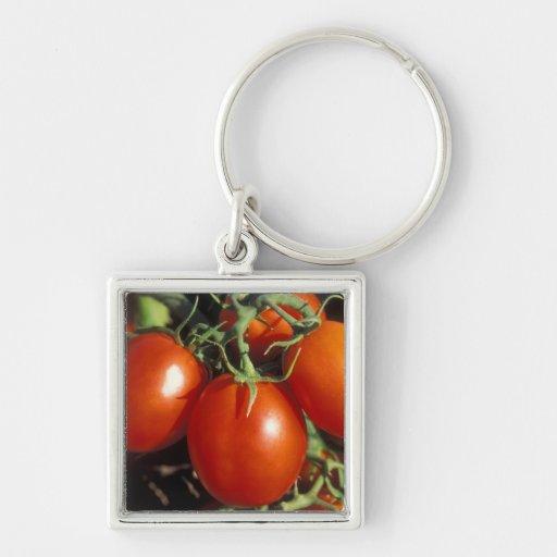 Tomates rojos llavero cuadrado plateado