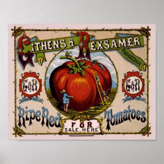 Tomates rojos maduros del anuncio del vintage póster