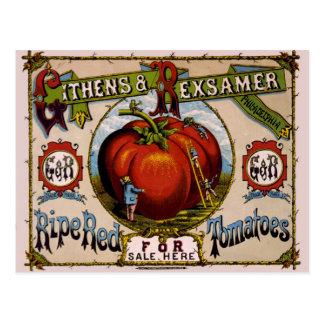 Tomates rojos maduros del anuncio del vintage tarjeta postal