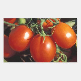 Tomates rojos pegatina rectangular
