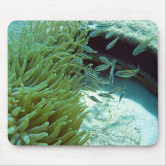 Tomates Swimming With Anemone Mouse Pad