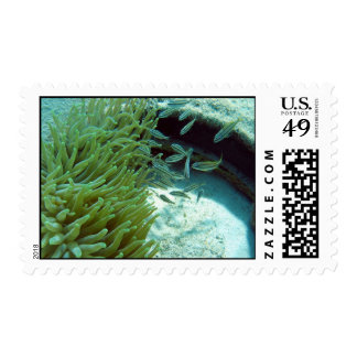 Tomates Swimming With Anemone Stamps