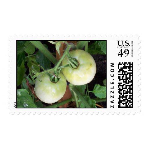 Tomates verdes sellos