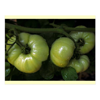 Tomates verdes postales
