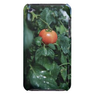 Tomato Case-Mate iPod Touch Case