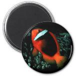 Tomato ClownFish Magnet