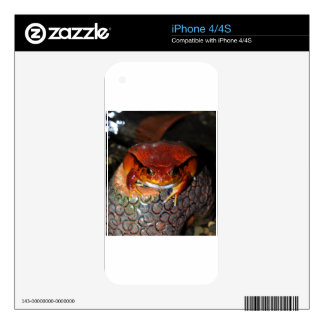 Tomato frog iPhone 4 decal
