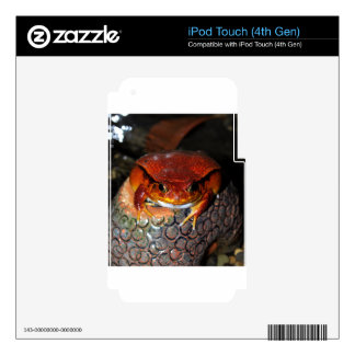 Tomato frog iPod touch 4G skins