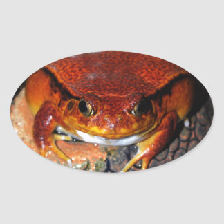 Tomato frog oval sticker