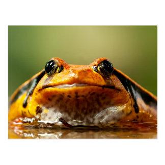 Tomato Frog Postcard