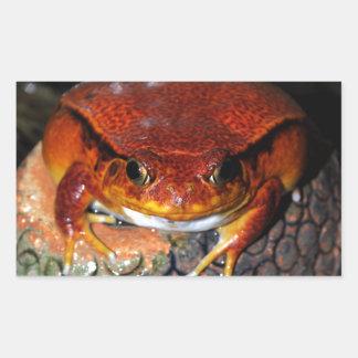 Tomato frog rectangular sticker