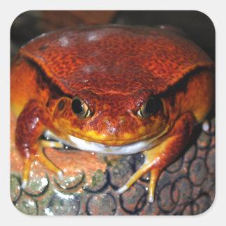 Tomato frog square sticker
