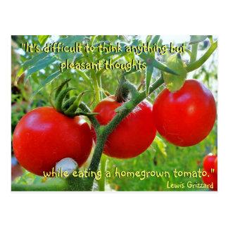 Tomato Fun Quote Postcard