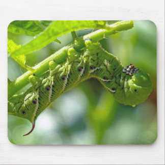 Tomato Hornworm Mouse Pad
