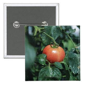 Tomato Pinback Button