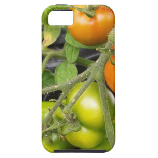 Tomato Plant iPhone 5 Covers