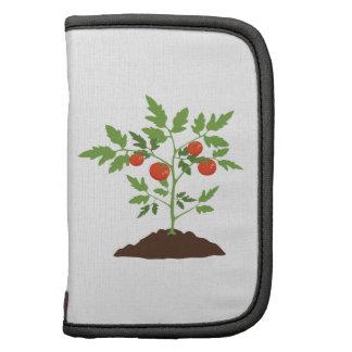Tomato Plant Planner