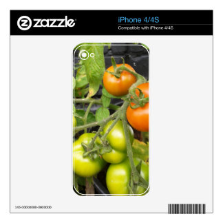 Tomato Plant Skins For iPhone 4