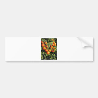 Tomato plants growing in the garden bumper sticker