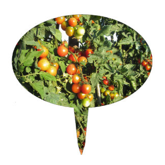 Tomato plants growing in the garden cake topper