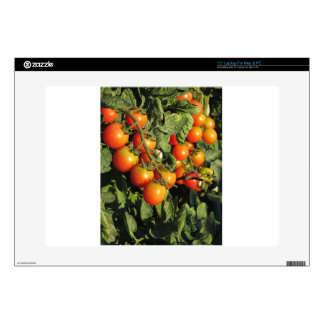 """Tomato plants growing in the garden decal for 15"""" laptop"""