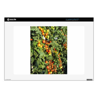 """Tomato plants growing in the garden decals for 15"""" laptops"""