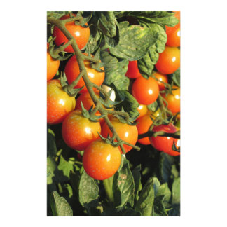 Tomato plants growing in the garden stationery