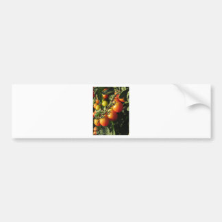 Tomato plants growing in the garden . Tuscany Bumper Sticker