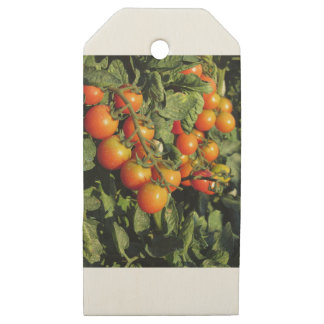 Tomato plants growing in the garden wooden gift tags