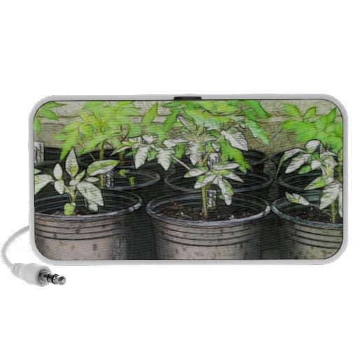 Tomato Seedlings In Nursery Pots Mini Speaker