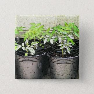 Tomato Seedlings In Nursery Pots Pinback Button