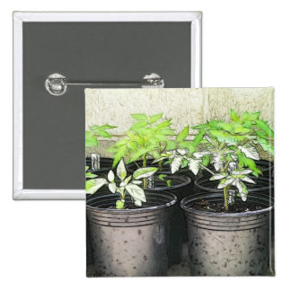 Tomato Seedlings In Nursery Pots Pinback Button