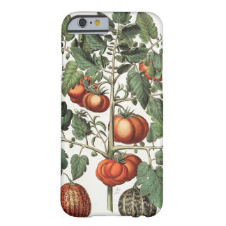 Tomatoes and Melons: 1.Poma amoris fructu luteo; 2 Barely There iPhone 6 Case