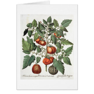 Tomatoes and Melons: 1.Poma amoris fructu luteo; 2 Card