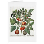 Tomatoes and Melons: 1.Poma amoris fructu luteo; 2 Greeting Card