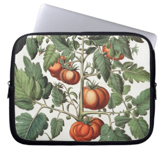 Tomatoes and Melons: 1.Poma amoris fructu luteo; 2 Laptop Computer Sleeve