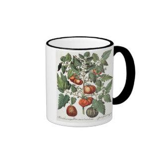 Tomatoes and Melons: 1.Poma amoris fructu luteo; 2 Coffee Mug