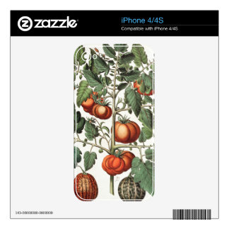 Tomatoes and Melons: 1.Poma amoris fructu luteo; 2 iPhone 4S Decal