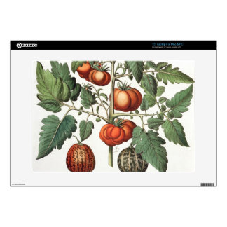 Tomatoes and Melons: 1.Poma amoris fructu luteo; 2 Laptop Skin