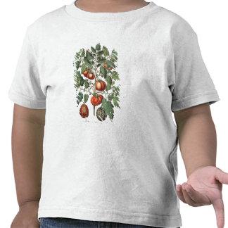 Tomatoes and Melons: 1.Poma amoris fructu luteo; 2 Tshirts