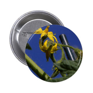 Tomatoes Blossoms Flowers Pins