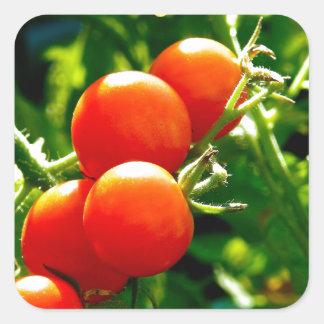 Tomatoes on a Vine Square Sticker