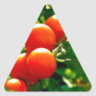 Tomatoes on a Vine Triangle Sticker