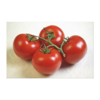 Tomatoes on the vine For use in USA only.) wrappedcanvas